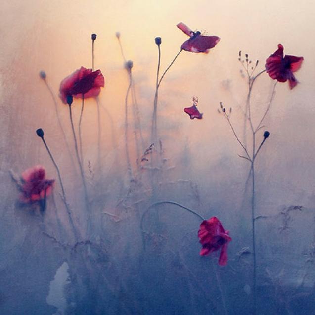 Röda blommor i fotografi