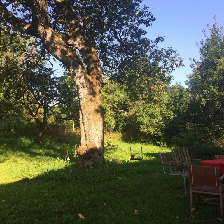 FyraVindar-tree-min
